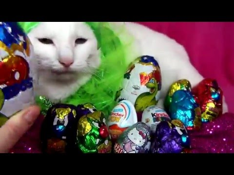 big cat and a lot of surprise eggs!!!