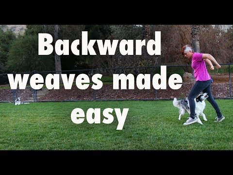 Backward weaves made easy  - how to train dog tricks