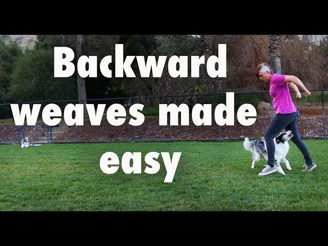 Backward weaves made easy  - how to train dog tricks