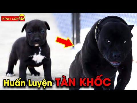 gửi hàng đi mỹ - 🔥 7 Bí Ẩn Về Chó Nghiệp Vụ Mà Đội Đặc Nhiệm Mỹ Không Muốn Tiết Lộ Cho Ai Biết   Kính Lúp TV