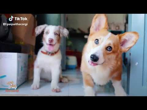 Try Not To Laugh Challenge 😍 Funny Cat & Dog Vines compilation 2018