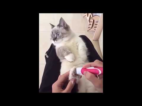 Funny Cats and Dogs Videos | Best Vines Ever