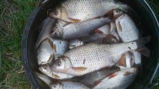 Рыболовные уроки Кевина Грина   Плотва в холодной воде
