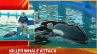 !!SEA WORLD TRAINER ERROR CAUSED WHALE ATTACK, MENTOR SAYS!!