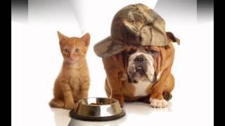 корм белькандо для собак(, 2014-10-20T17:54:22.000Z)