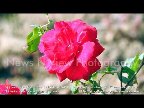 flower show 2017 ahmedabad | riverfront flower park garden
