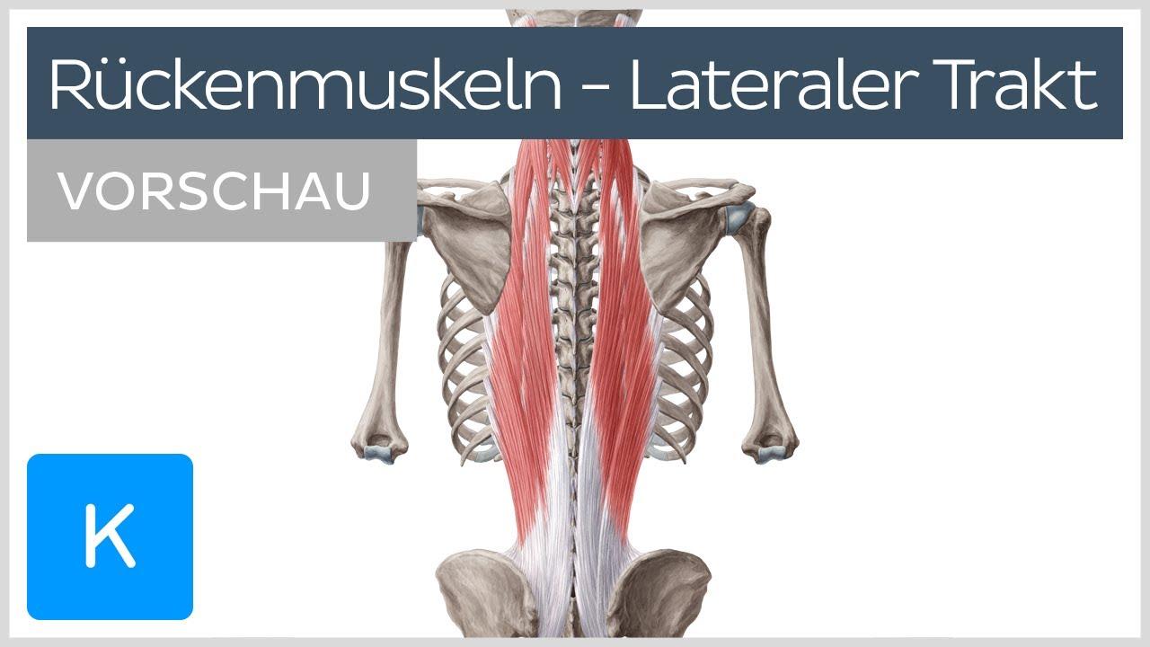 Autochthone Rückenmuskulatur: Aufbau und Funktion des lateralen Trakts (Vorschau) |Kenhub