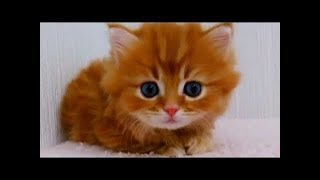 So many cute kittens videos compilation 2020 #3