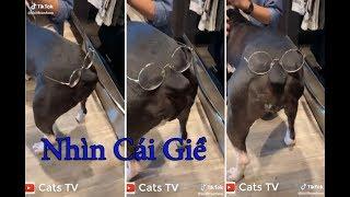 chó mèo hài hước phá banh nhà nhưng cực kì cute | cats tv - tik tok chó mèo