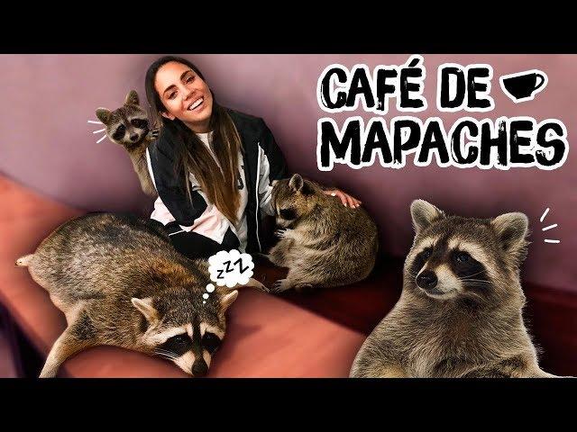 ENCONTRAMOS UN CAFÉ DE MAPACHES EN COREA! | Katy The Chic
