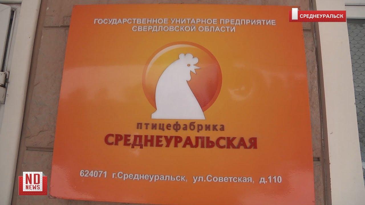 Опасные цеха Среднеуральской птицефабрики продолжат работать