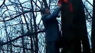 Кавор на дереве.mp4