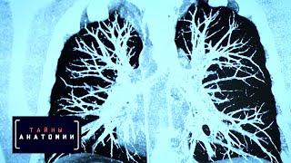 Тайны анатомии. Дыхательная система