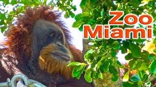 Zoo Miami | Traveling Robert