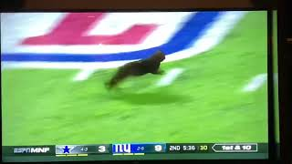 """""""THeRE IS NoW A BLacK Cat ON ThE FielD"""""""