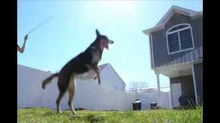 DOUBLE DUTCH DOG BLOWS YOUR MIND