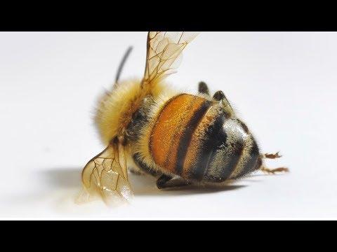 Как и чем ЛЕЧИТЬ пчел от ГНИЛЬЦА?