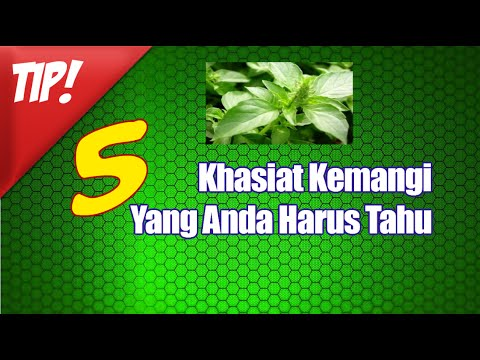 5-manfaat-daun-kemangi-atau-khasiat-daun-kemangi