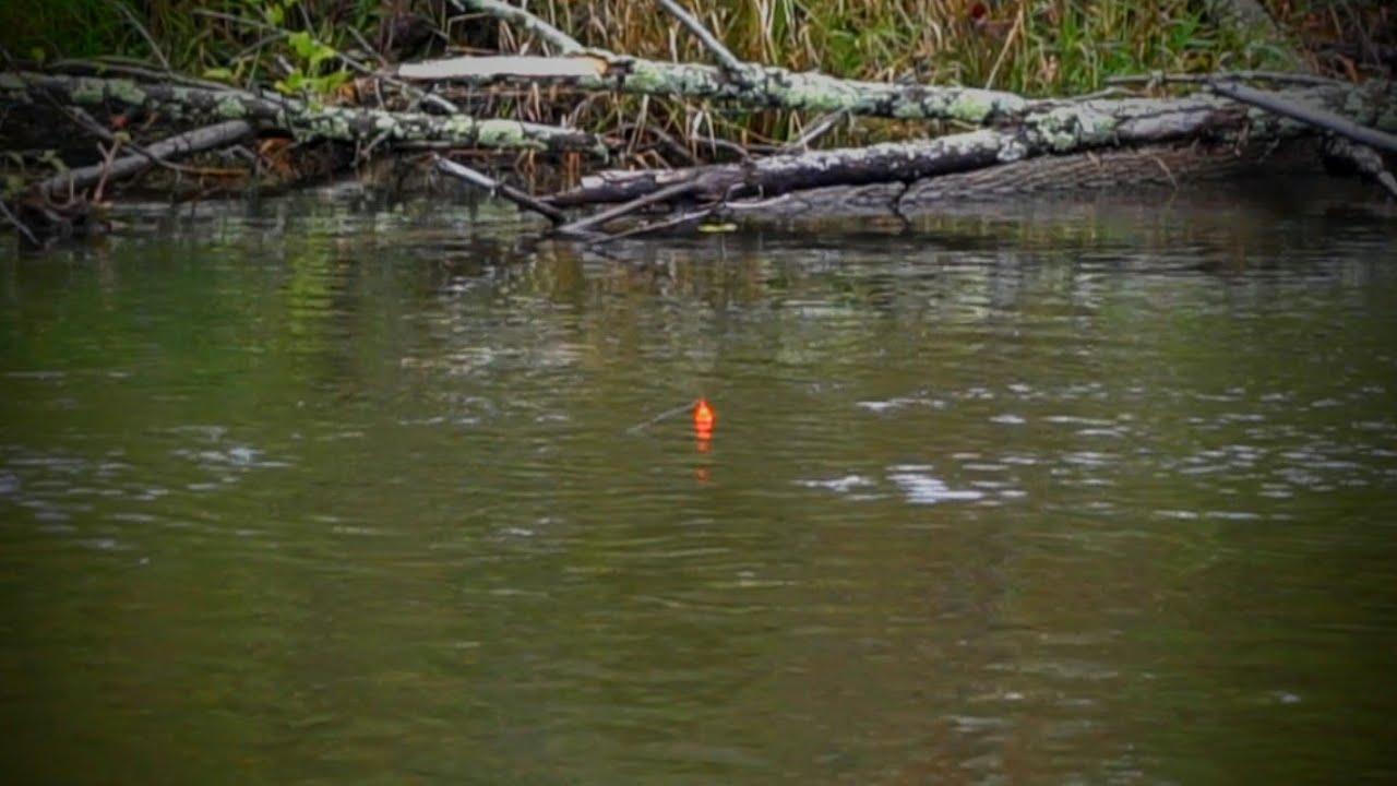 September Salmon BOBBER DOWNS - Skein Fishing Remote Rivers