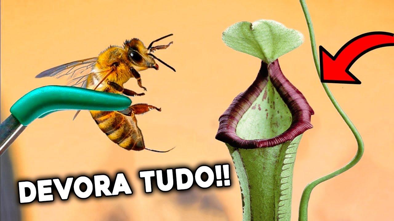 INCRÍVEL Como Essa PLANTA CARNÍVORA Devora Vários INSETOS!!