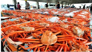 Awesome Japan Spider Crab Big Catch Modern Vessel - Crab Harvesting Net Deep Sea -  Crab Factory