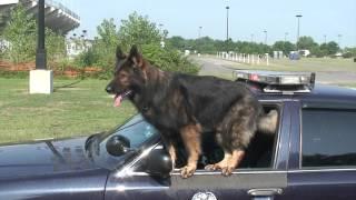 East Hartford Police K 9