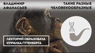 Владимир Афанасьев - Вымершие и современные родственники человека