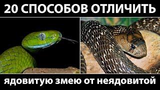 20 реальных способов отличить ядовитую змею от неядовитой