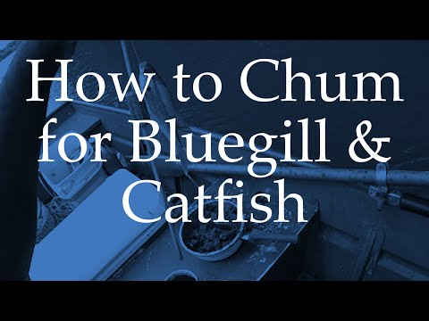 How To Chum For Bluegill And Catfish