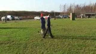 Czechoslovakian wolfdog B-Exam(training)