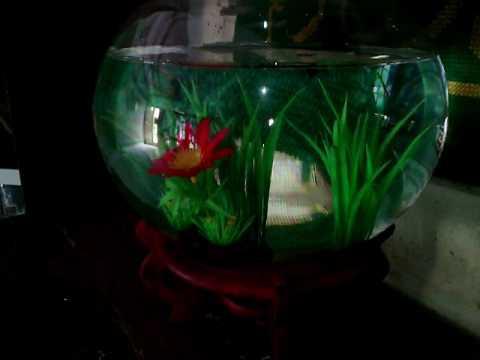 Aquarium mini terkeren untuk ikan hias aquarium bulat for Aquarium poisson rouge boule