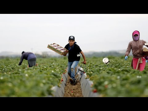 Celebrating California Farm Workers and Agriculture
