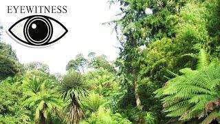 Все Про Джунгли | BBC Документальный Фильм | Eyewitness | Jungle