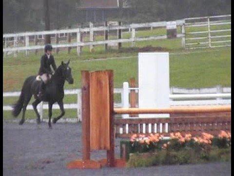 Hickory Bits - Large Pony Htr - Quentin (raining)