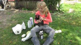 How to remove lice from a chicken