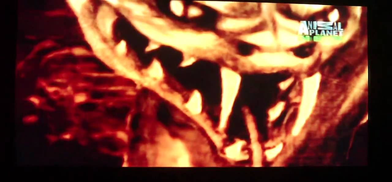lost tapes episode 31 Q....the serpent god part-2 - YouTube