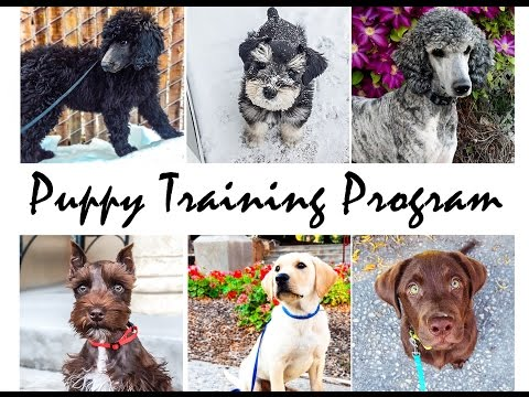 CHECK THIS OUT! Amazing Puppy Training Program Produces SUPER SMART Canines!