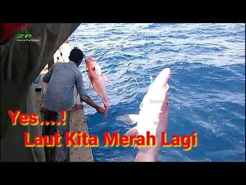 Alhamdulillah laut kita merah lagi || mancing ikan kakap merah