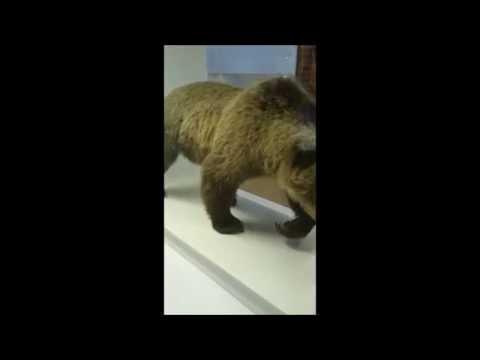 Vlog #1 Muséum Histoire naturelle de Bourges