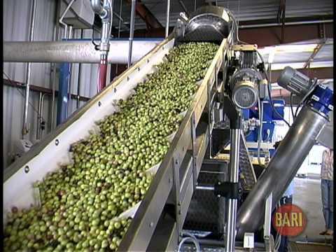 Bari Olive Oil Mill Operation