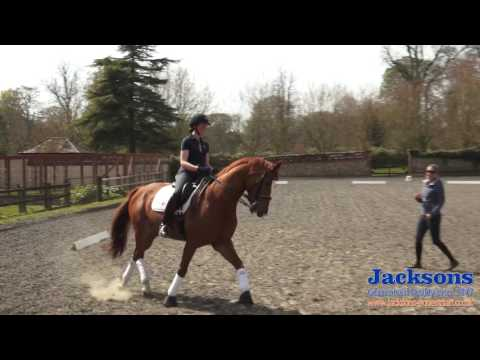 Anna RossDavies  How to ride the shoulderin