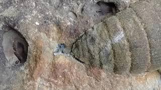 Big fossil in Cape Breton, Canada