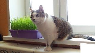 Трава для кота.Пятый день роста травы.