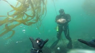 Wahoo Man! Trophy abalone diving and spearfishing