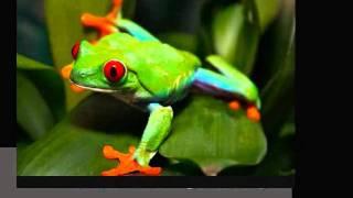 Vertebrate or Invertebrate