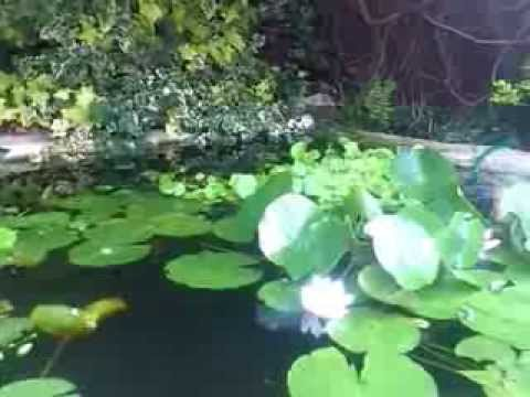 Fun new pond doovi for Garden pool doomsday preppers