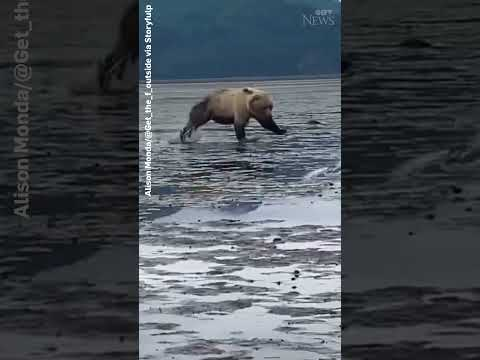 Two massive bears fight as hikers in Alaska watch #shorts