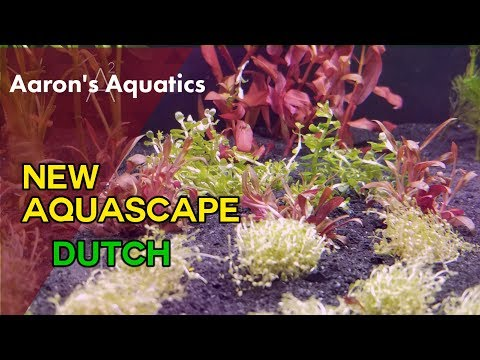 Dutch Style Aquascape - New Aquascape!