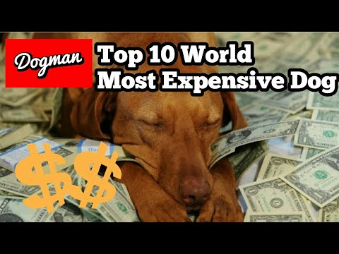Worlds Top 10: Most Expensive Dog Breed