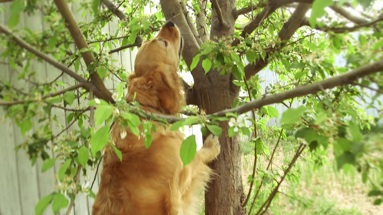 dog tries to get cat out of tree youtube. Black Bedroom Furniture Sets. Home Design Ideas